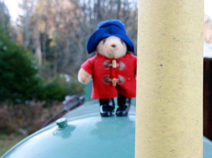 Photo shoot - Paddington Bear