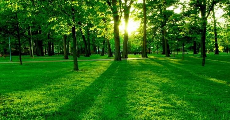 bosques-hermosos-1